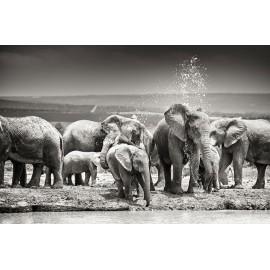 tableau shady ivory