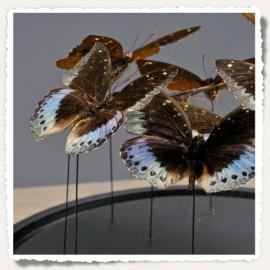 Globe demi sphère papillons